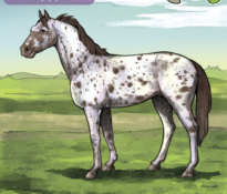Name That Horse! (Horse #6)